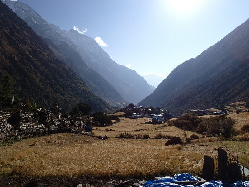 Manaslu circuit trek vegetation